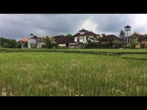 Rs 2000 A NIGHT TO STAY HERE - SRI BUNGALOWS UBUD BALI