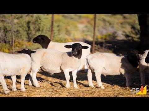Clique e veja o vídeo Curso Gerenciamento na Criação de Ovinos CPT