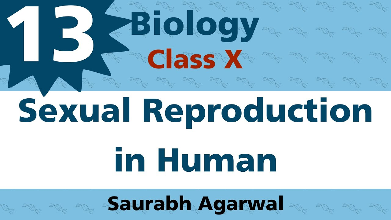 Sexual Reproduction In Human Class 10 Biology Youtube