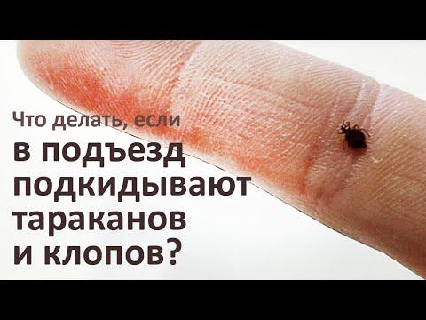 Видео: Что делать, если вам подкидывают тараканов и клопов...