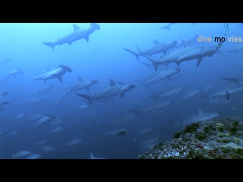 "Cocos Island (Isla del Coco) ""Mountain of sharks"" (HD DOKU 2015)"