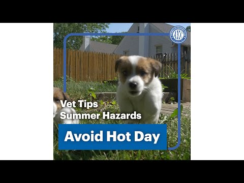 Vet Tips | Avoid Hot Day - Summer Hazard