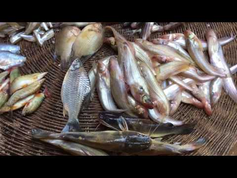 Cambodian Meats, Fresh River Fishes, Snakes, Eels from Tonle Sap