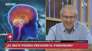 ¿El mate podría prevenir el Parkinson? - Café de la Tarde
