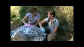 Karla Pound's WILD OUTBACK LIFE! Galapagos Tortoise - Totally Wild