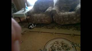 Как кот любить своего хозяина !!
