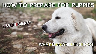 How To Prepare For Great Pyrenees Puppies To Be Born | Small Farm Living