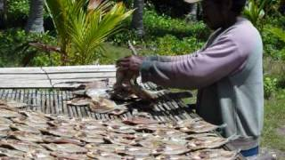 Banggai archipelago: preparing fish to be sun-dried
