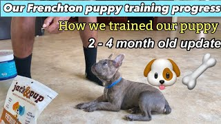 How we trained our Frenchton puppy