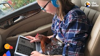 Rescue Rooster Loves Taking Girl to School Every Morning - BENNIE | The Dodo