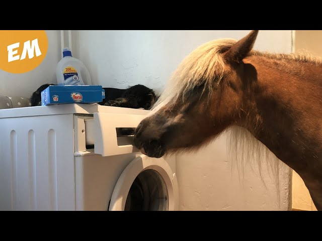 The Ponies are now doing the Laundry!