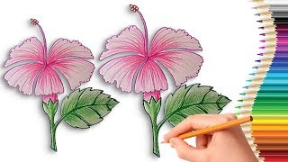 How to Draw a Hibiscus Flower Step by Step Easy for Kids Learn Drawing with Coloring Pages