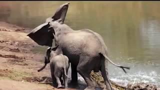 Животные спасают других животных - трогательные кадры