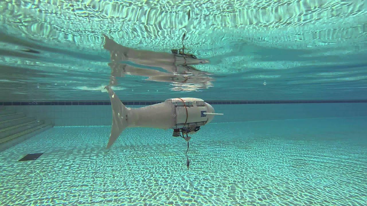Biomimetic robotic fish prototype 3 swimming pool test for Swimming pool fish