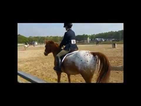 Delaware Valley Potential Horse Lease-- Chip