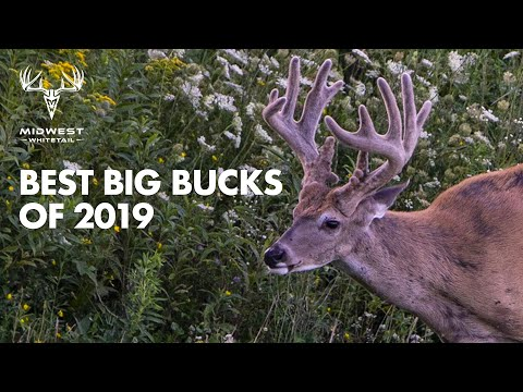 Best Of Midwest Whitetail 2019-2020 | Deer Hunting Giant Bucks | Realtree 365