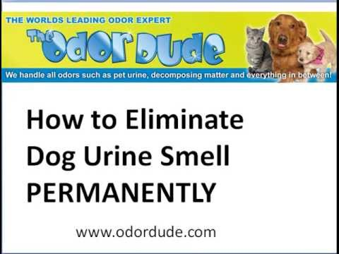How To Eliminate Dog Urine Smell Permanently | Simple step by step video