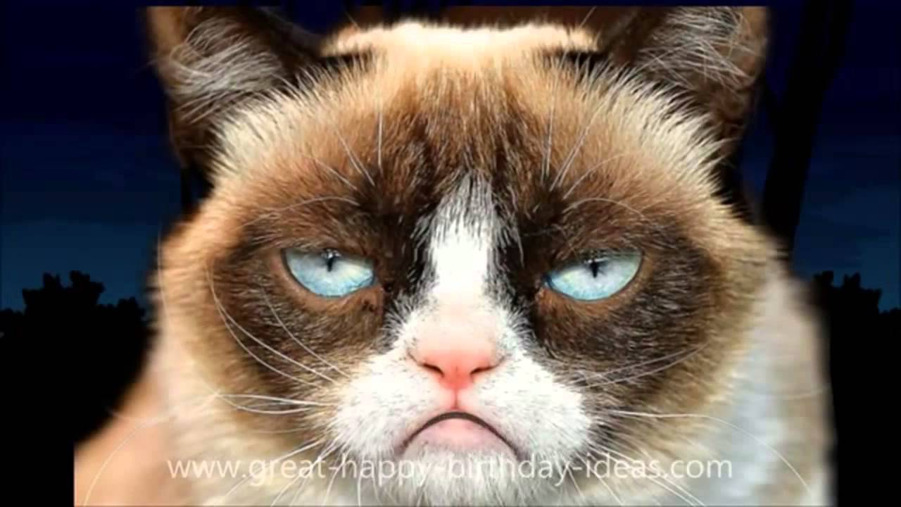 HAPPY BIRTHDAY Song For Mom Dad Kid Grumpy Cat ANIMALS FREE ECard