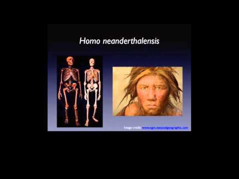 Teeth and Human Evolution