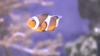 熱帶魚 海水魚 鹹水魚