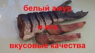 вяленая рыба.белый амур и его вкусовые качества..