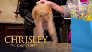 Chrisley's Top 100: Savannah's Puppy Woes (S4 E3)   Chrisley Knows Best