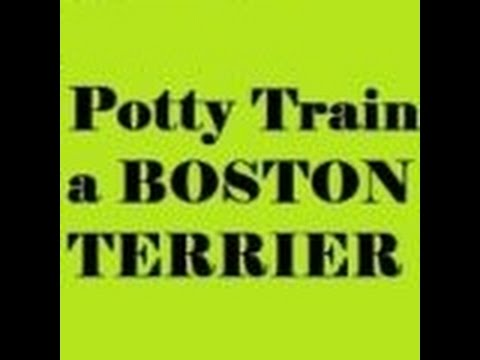 """""""How to Potty Train a Boston Terrier""""-How to Easily Potty Train your Boston Terrier puppy*FREE*"""