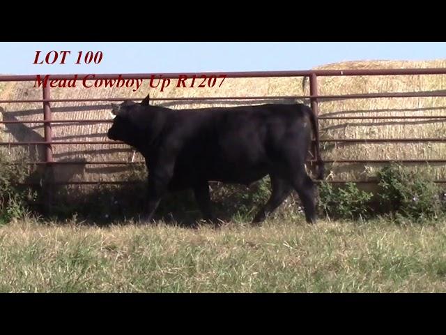 Mead Angus Lot 100