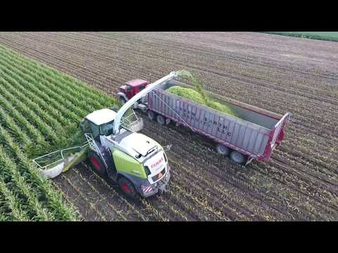 Stone Ridge Dairy Chopping Corn Silage
