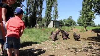 Visite en famille à la ferme