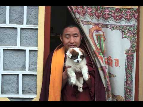 Lama Gyurme & Jean-Philippe Rykiel - Calling the Lama from Afar