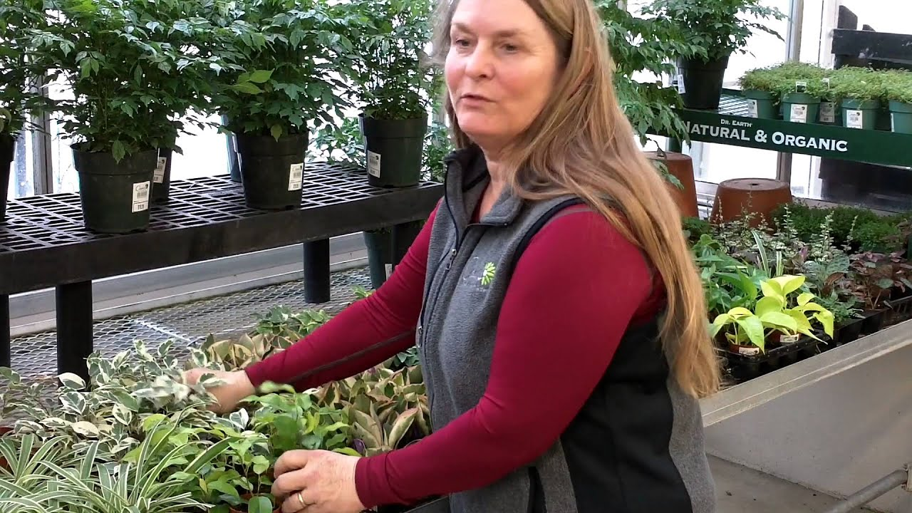 Fairy Gardening Plants And Ground Covers   YouTube