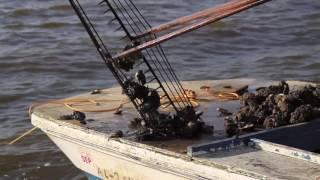 Regional Oyster Reef Restoration for a Cleaner Gulf | Gary Finch Outdoors LLC