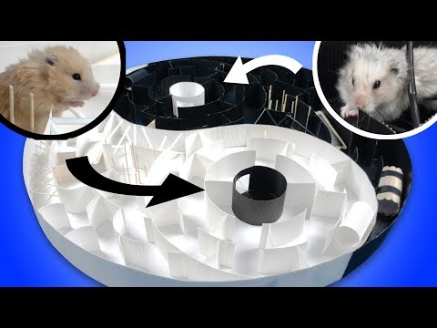 Yin Yang Maze for Cute Hamsters  Who Can Reach the Goal?