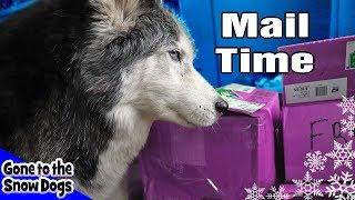Stuff You Sent The Dogs | Husky Fan Mail Vlog