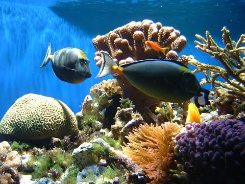 Are we harvesting too many fish for our aquariums?