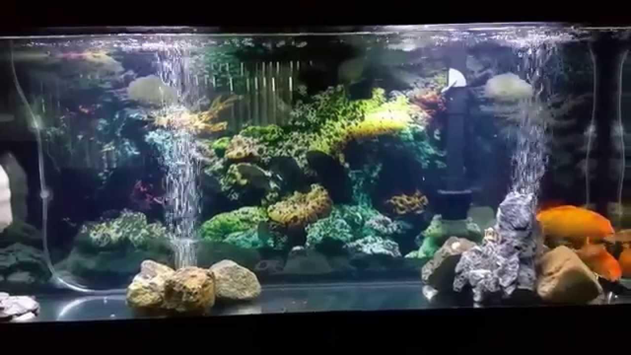 crystal clear aquarium water youtube