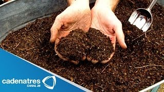 ¿Qué es y cómo se hace una composta? / What is compost and how is it done? thumbnail