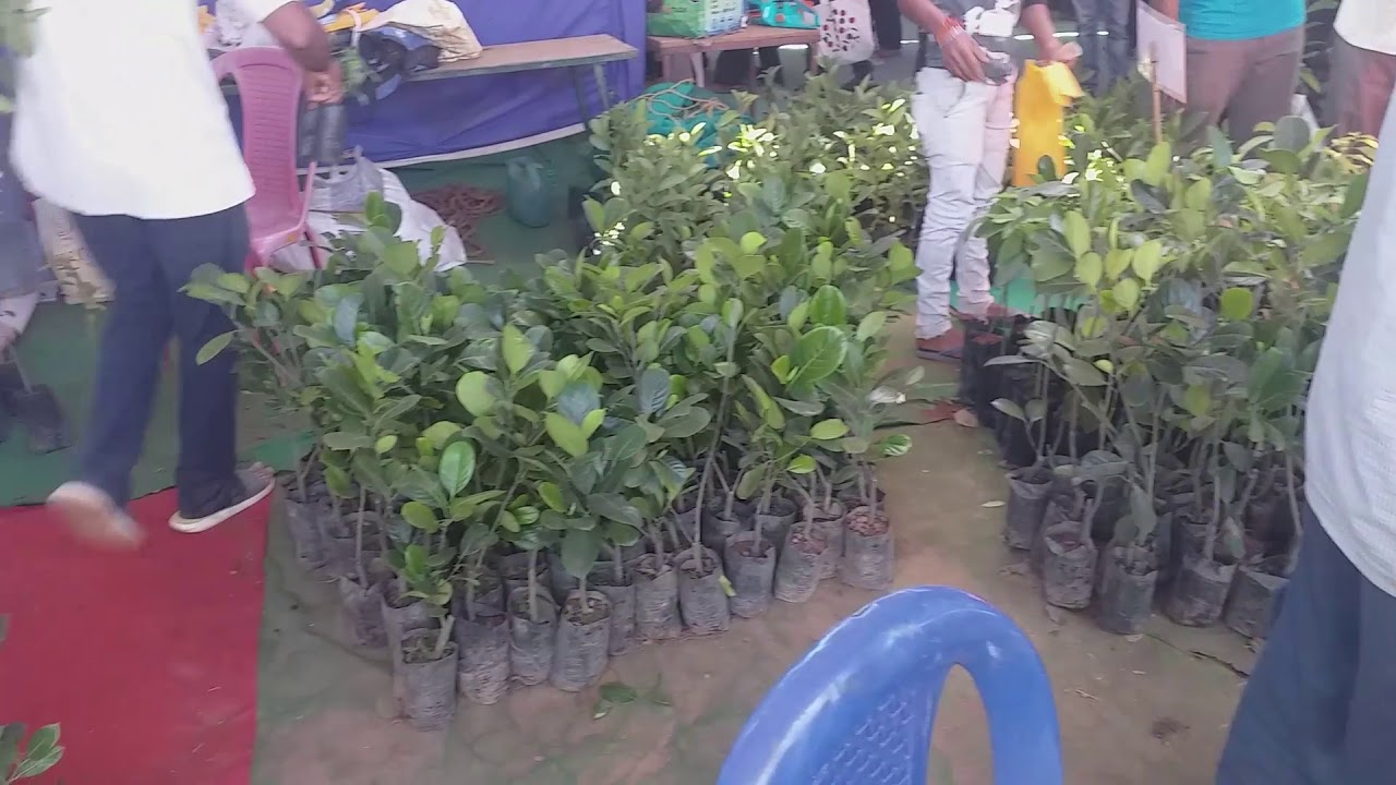Grafted Jackfruit plants in Horticultural fair