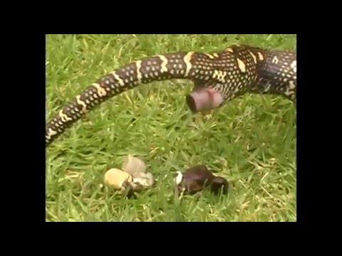 Time series momentum python