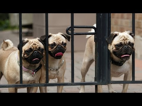Funniest Dogs Escaping Compilation