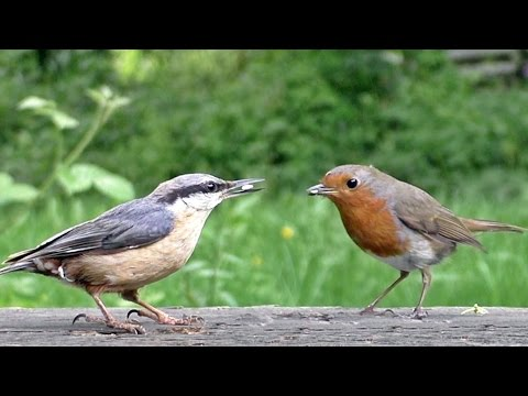 Beautiful Birds Coming and Going in Slow Motion
