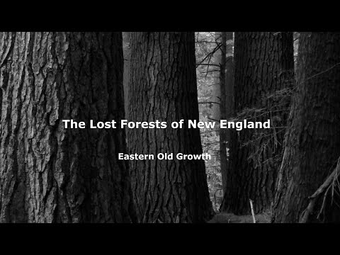 The Lost Forests of New England - Eastern Old Growth