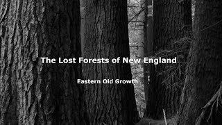 The Lost Forests of New England - Eastern Old Growth Video