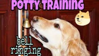 Potty training - how to teach your dog to ring bell to go outside | Dog training in hindi |
