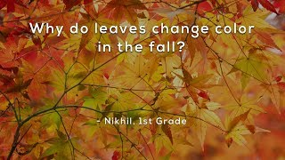 Why do leaves change color in the fall? thumbnail