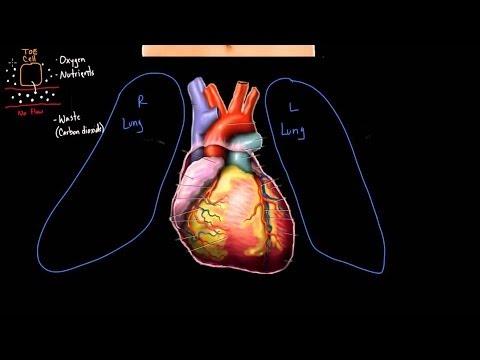 Meet the heart!   Circulatory system physiology   NCLEX-RN   Khan Academy