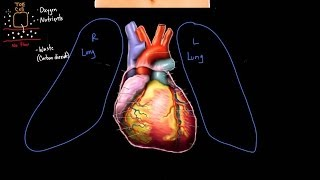 Meet the heart! | Circulatory system physiology | NCLEX-RN | Khan Academy