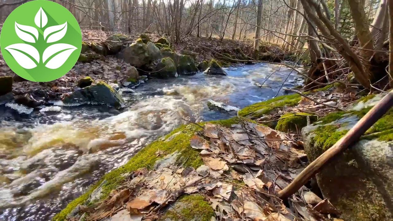 Spring forest stream. [10 hours] Stream sounds (White noise for sleeping)