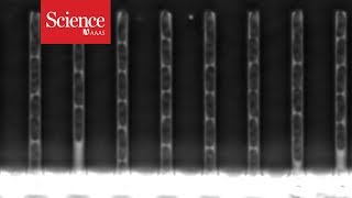 Mutating DNA caught on film